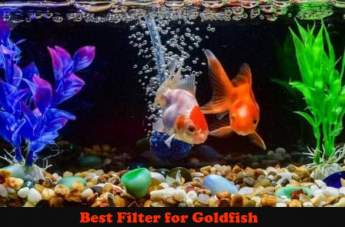 Best Filter for Goldfish