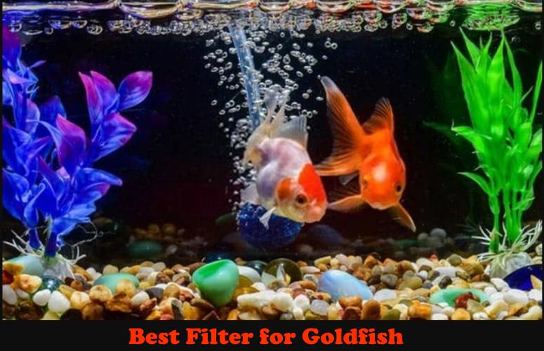 Best Filter for Goldfish