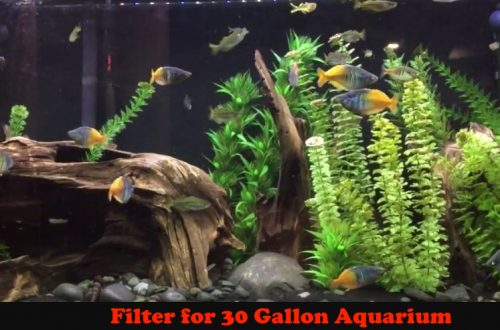 Filter for 30 Gallon Aquarium